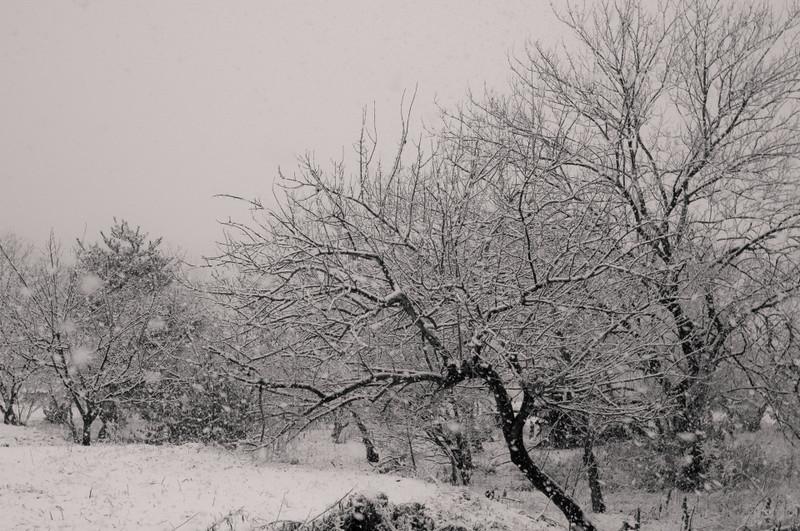 Snowisfallingnf